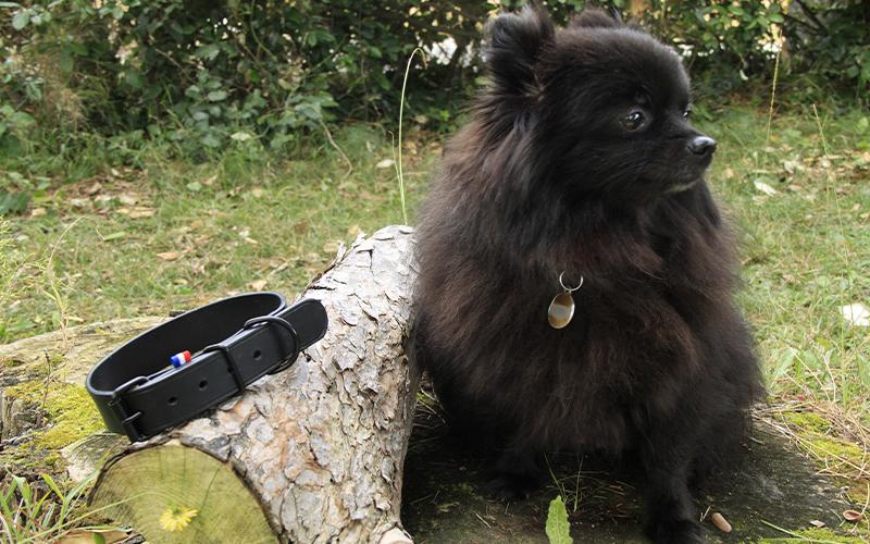 collier-en-cuir-pour-chien-noir
